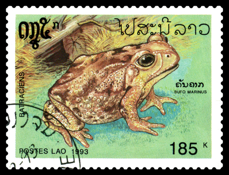 STAVROPOL, RUSSIA - December 06. 2017: a stamp printed by Laos  show  Bufo marinus, series Amphibians,  circa 1993