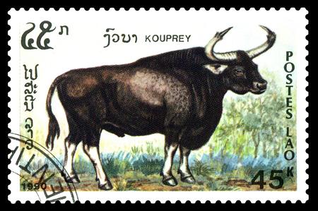 STAVROPOL, RUSSIA - December 15. 2017: a stamp printed by Laos  show  Kouprey (Bos sauveli),  circa 1990