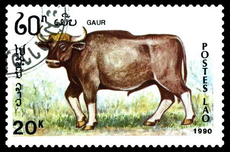 STAVROPOL, RUSSIA - December 15. 2017: a stamp printed by Laos  show Gaur (Bos gaurus),  circa 1990