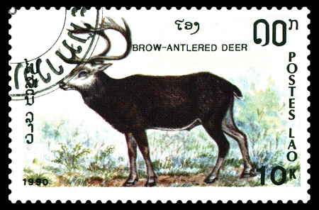 STAVROPOL, RUSSIA - December 15. 2017: a stamp printed by Laos  show  Brow- antlered deer  (Panolia eldii),  circa 1990