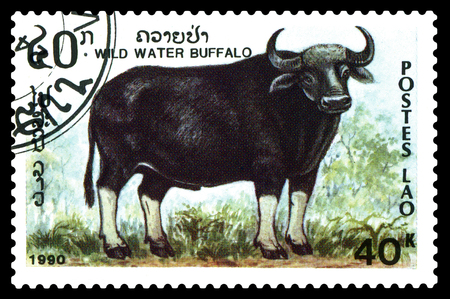 STAVROPOL, RUSSIA - December 15. 2017: a stamp printed by Laos  show  Wild water buffalo,  circa 1990