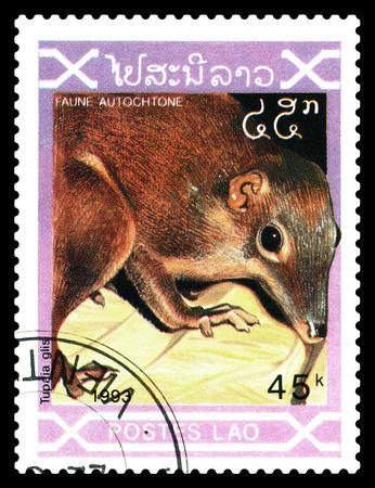 STAVROPOL, RUSSIA - December 21. 2017: a stamp printed by Laos  show  Tupaia Glis,  circa 1993