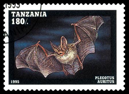 STAVROPOL, RUSSIA - February 17, 2018: A stamp printed by Tanzania shows Plecotus auritus, circa 1995 Editorial