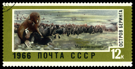STAVROPOL, RUSSIA - February 21, 2018: a stamp printed by Russia shows  seals, Bering Island,   circa 1966 Editorial