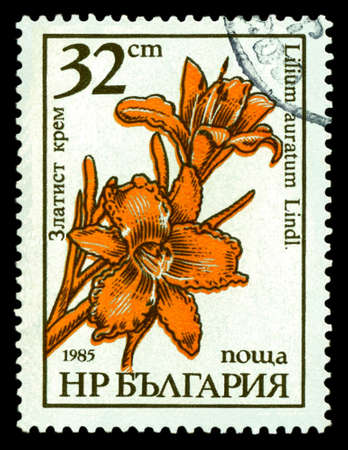 STAVROPOL, RUSSIA - May 15. 2020: A stamp printed in  Bulgaria  shows  Golden lily, Lilium auratum Lindl, circa 1985 Editorial