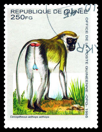 STAVROPOL, RUSSIA - July 30.2020: A Stamp sheet printed in Guinea shows monkey Ladybugs (Cercopithecus aethiops), circa 1995
