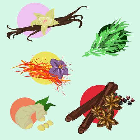specerijen - dragon, vanille, anijs, kaneel, saffraan, gember