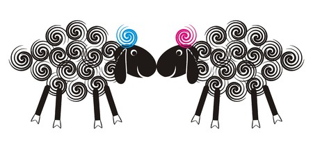 Two cute lambs sniffing each other with black heads and wool spirals Vector
