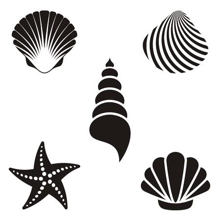 다양한 검은 바다 조개와 불가사리의 설정