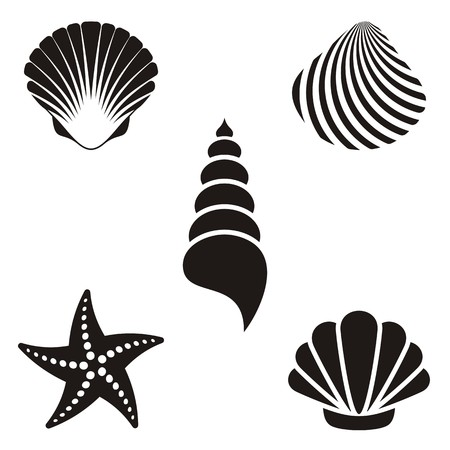 Set of various black sea shells and starfish