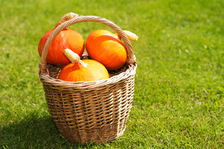 three pumpkins in the basket with grass background