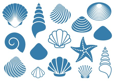 scallop shell: Set of various blue sea shells and starfish