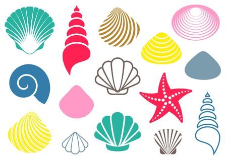 Set of various colorful sea shells and starfish Vector