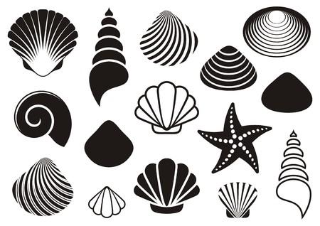 conchas: Conjunto de diversas conchas de mar negro y estrellas de mar Vectores