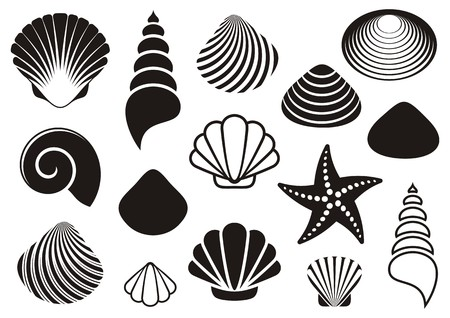 sea shells on beach: Set of different black sea shells and starfish Illustration