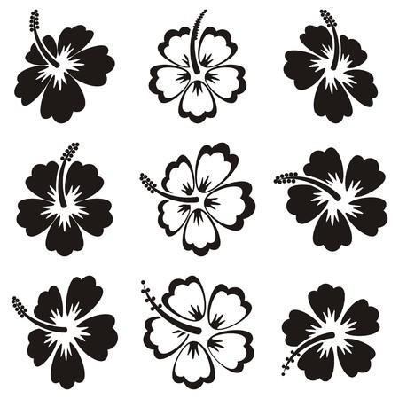 Hibiskus-Blume In Schwarz Und Weiß Lizenzfrei Nutzbare ...