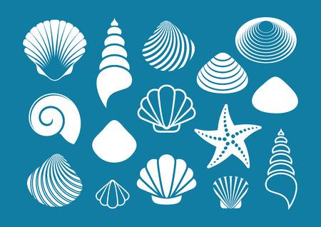 estrella de mar: Conjunto de varias conchas de mar y estrellas de mar blancas