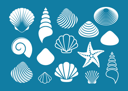 scallop shell: Set of various white sea shells and starfish