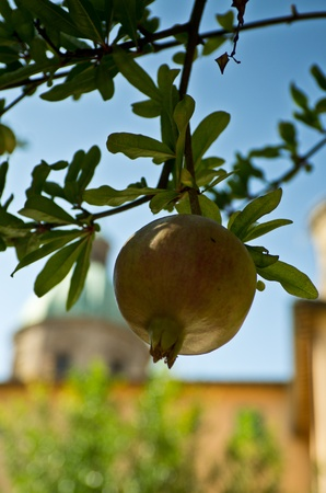 Pomegranate on branch with European church on the background against a blue sky
