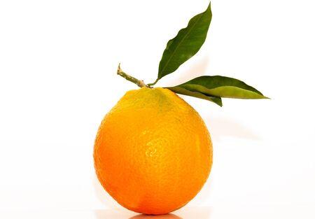 Un bel oranger frais isol� sur un fond blanc Banque d'images