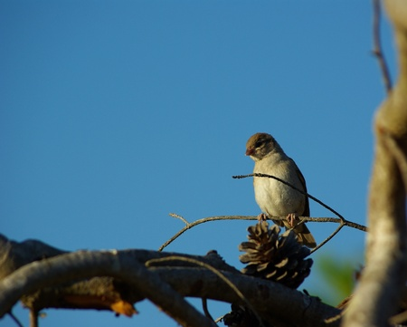 A small sparrow I spotted resting on that tiny little branch,under the blue sky.