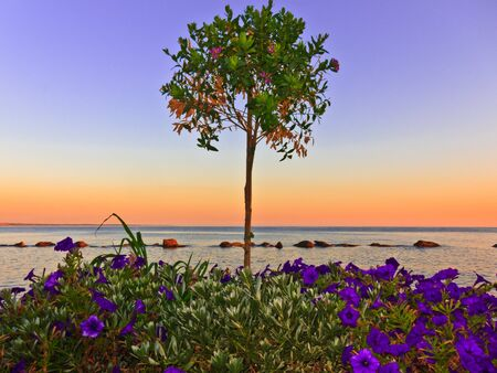Colourful orange ocean sunset with vibrant purple flowers flowers and tree in foreground.