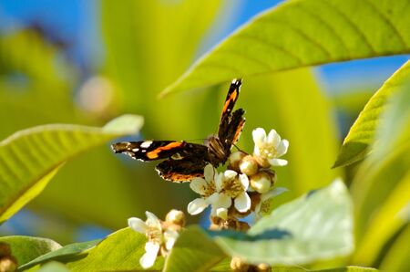 Bebiendo de la mariposa néctar de una flor, ángulo de visión baja que muestra trompa Foto de archivo - 11569187