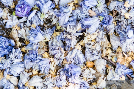 Background of colourful blue potpourri with a mixture of dried aromatic flower petals and herbs to scent and freshen the air Stock Photo