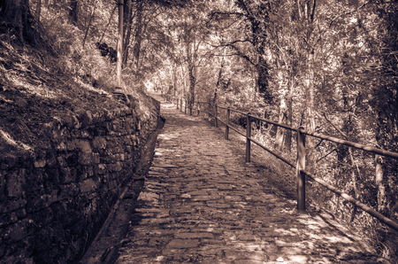 pathway through nature in monochrome tones