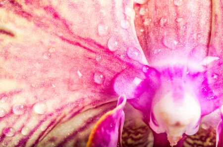 Close up Water Drops on Beautiful Red Violet Wet Flower Petals Stock Photo