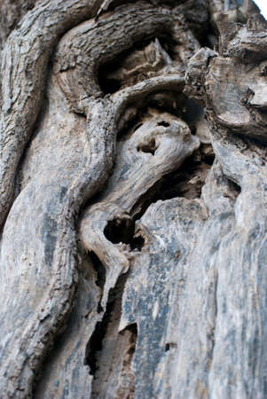 anthropomorphous: Curious ghost shape in a dead trunk Stock Photo