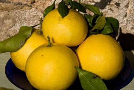 citrus aurantium: grapefruit fruits Stock Photo