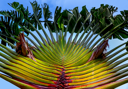 a kind of tropical palm tree against the blue sky