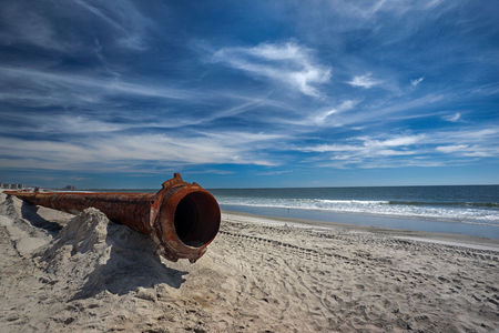 ecology of the sea coast