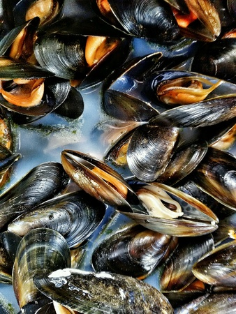 molluscs: Closeup view of cooked  mussels with shell
