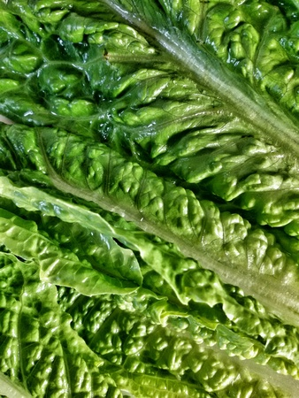 romaine: Closeup view of romaine leaves lettuce Stock Photo