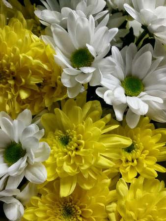 closeup: Closeup view of beautiful flowers