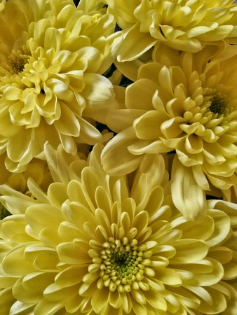 texture: Close up view of yellow flowers