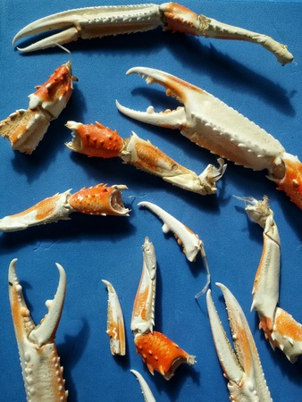 langoustine: Close up of cooked legs and claws of langoustines