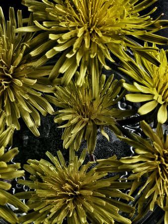 closeup: Closeup view of beautiful dandelions Stock Photo