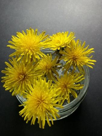 recipient: Close view of dandelions in recipient
