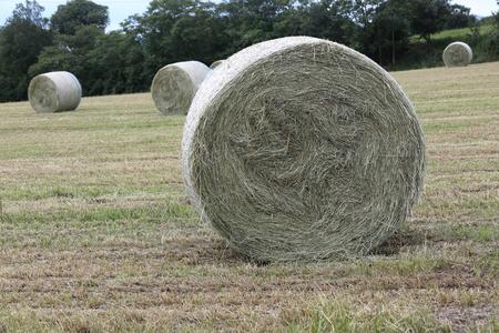 bales: hay bales Stock Photo