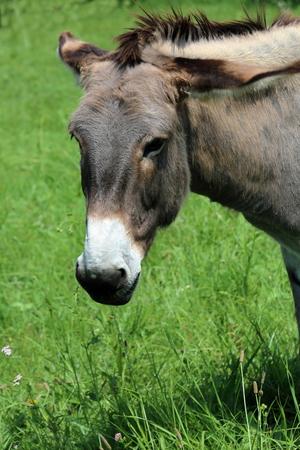 mini farm: donkey
