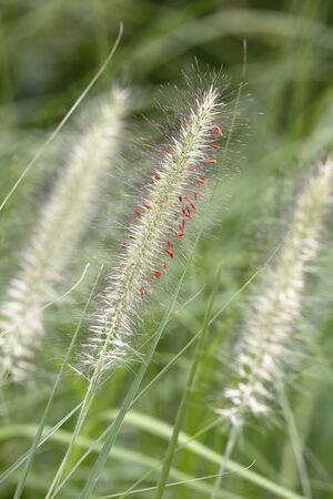 wil: wild plant Stock Photo