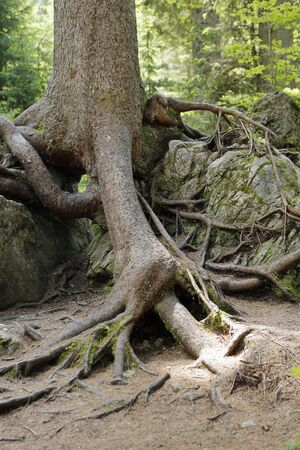 strong roots: roots