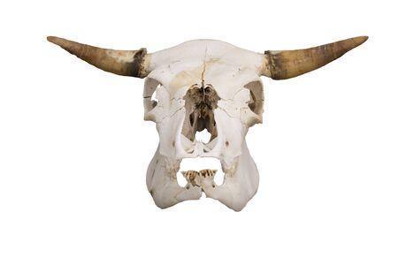 herbivores: cow skull Stock Photo