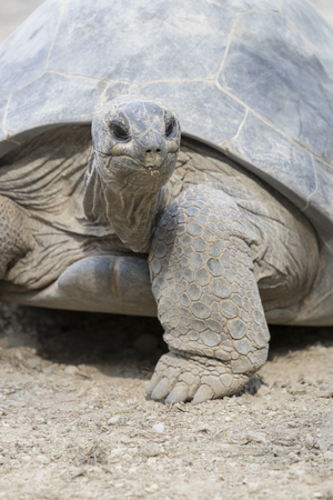 protection of land: tortoise of the Seychelles