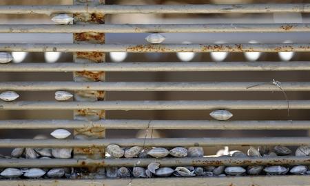 imprisoned: imprisoned shells Stock Photo