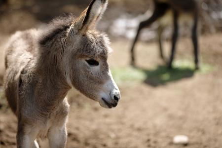Donkey in the farm fence