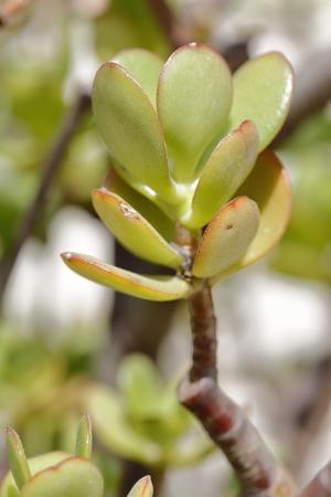 A carnivorus plant Stock Photo
